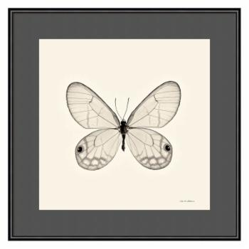 Amani Art Butterfly I BW Crop by Debra Van Swearingen
