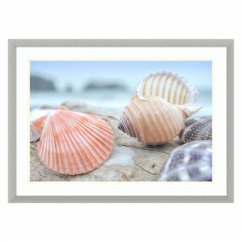 Amani Art Rodeo Beach Shells 10 by Alan Blaustein