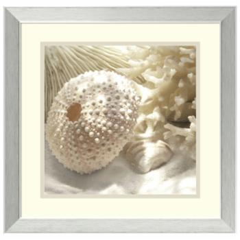 Amanti Art Framed Print - Coral Shell I by Donna Geissler