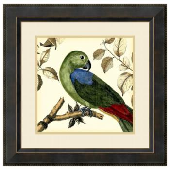 Amanti Art Framed Print - Tropical Parrot III by Martinet