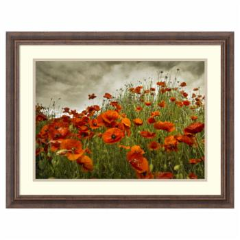 Amanti Art Framed Print - Bobbis Poppies by David Lorenz Winston