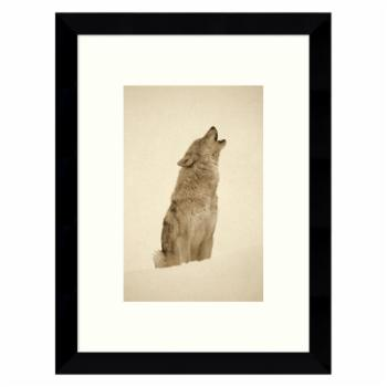 Amanti Art Framed Print - Timber Wolf Portrait Howling in Snow North America - Sepia by Tim Fitzharris