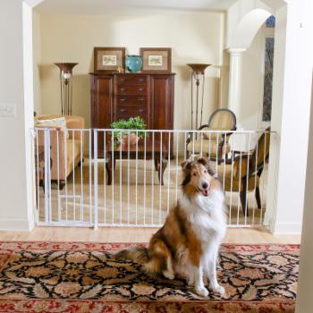 Maxi Extra Tall Walk-Thru Gate with Pet Door - 37W x 38H in.