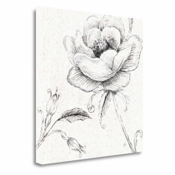 Tangletown Fine Art Blossom Sketches II Canvas Wall Art By Daphne Brissonnet