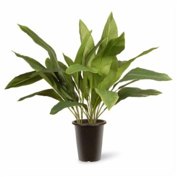 National Tree Company Garden Accents Aspidistra Floor Silk Plant