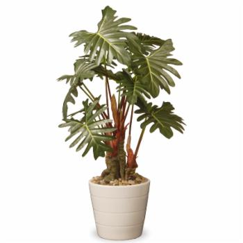 National Tree Company Garden Accents Philodendron Floor Silk Plant