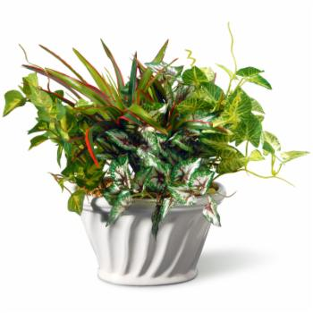 National Tree Company 11 in. Table Top Silk Plant