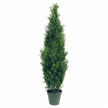 60-in. Arborvitae with Green Pot