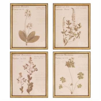 Paragon Decor Botanicals Wall Art - Set of 4